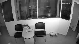Видеокамера IP IVM-2828. Офис, ночь.